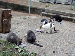 pourquoi capturer les chats harets fondation chats des rues. Black Bedroom Furniture Sets. Home Design Ideas